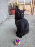 Hračka pro kočku
